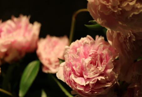 美しく咲いた花